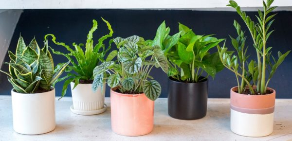 Late Winter Houseplant Care
