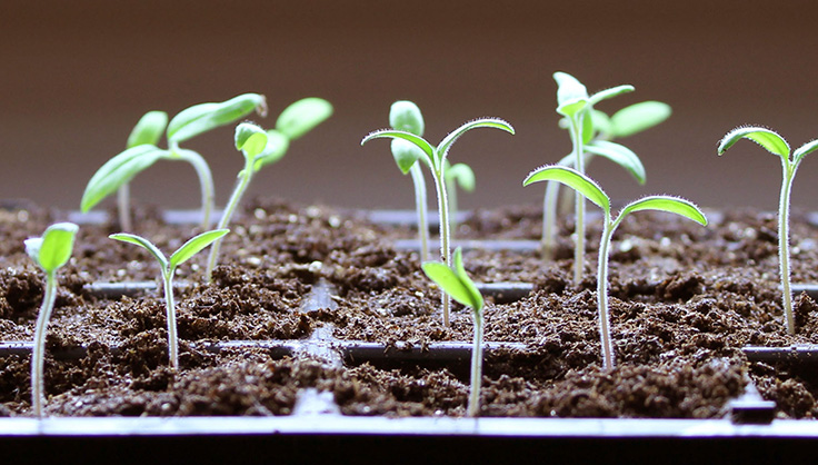 Read more about the article Grow Your Own!