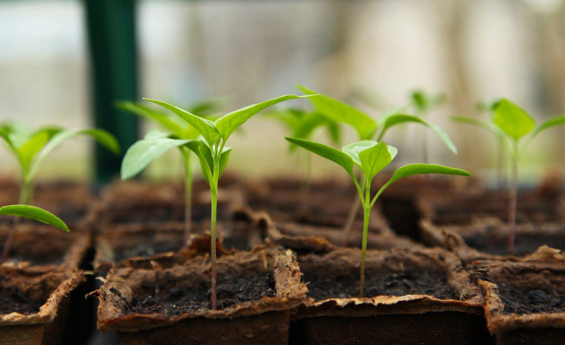 Hardening Off Seedlings and Other Spring Tasks
