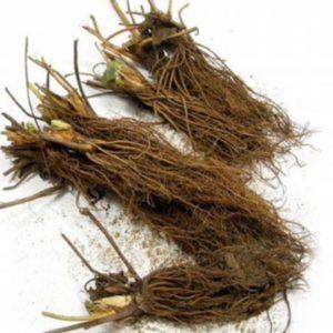 STRAWBERRY HECKER – bare root