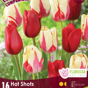 COMPANION HOT SHOTS