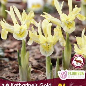 IRIS DWF KATHERINES GOLD