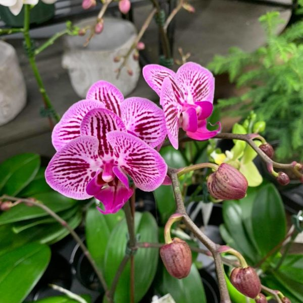 Read more about the article A Beginners Guide to Growing Orchids