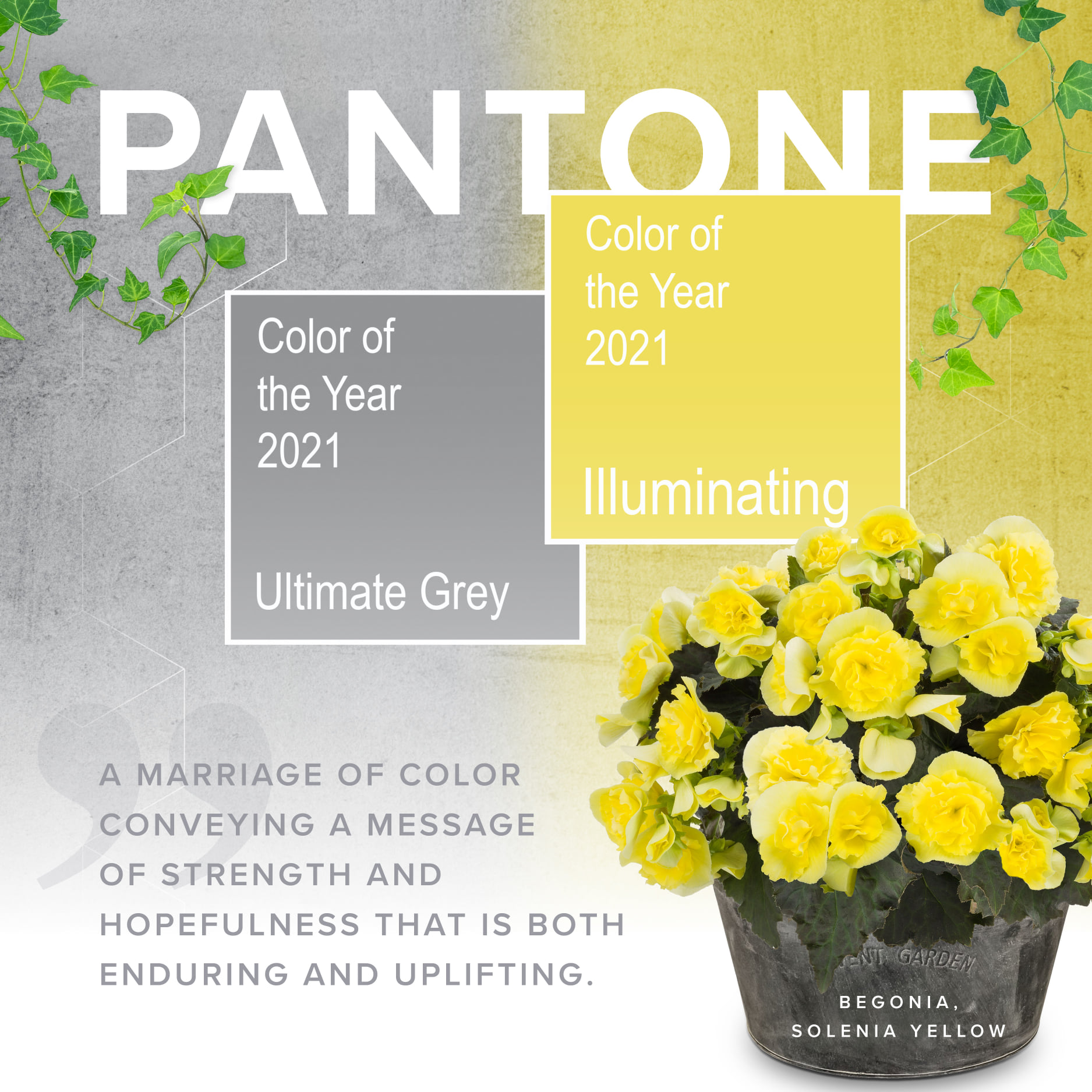 Read more about the article Colour Trends for Spring and Summer