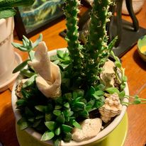 Read more about the article Winter Indoor Plant Care