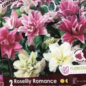 LILY COMBO – Roselily Romance