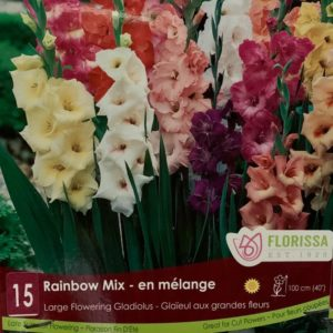 GLADIOLUS BULBS Rainbow Mix