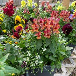 11″ SPRING PLANTERS – MIXED