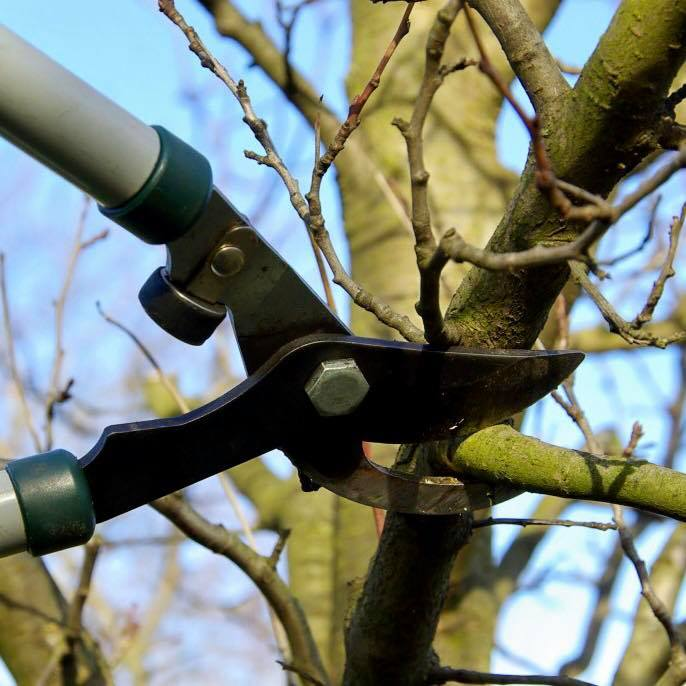 Read more about the article Spring is the Time for Dormant Pruning