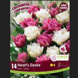 COMPANION HEART'S DESIRE PKG 14