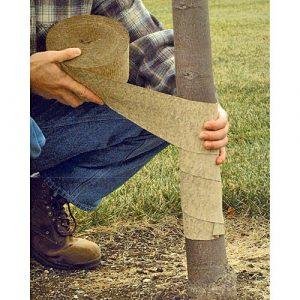 Tree-Wrap-Pic-2